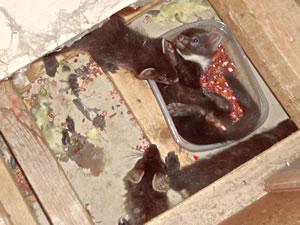 Muizenkeutels in huis